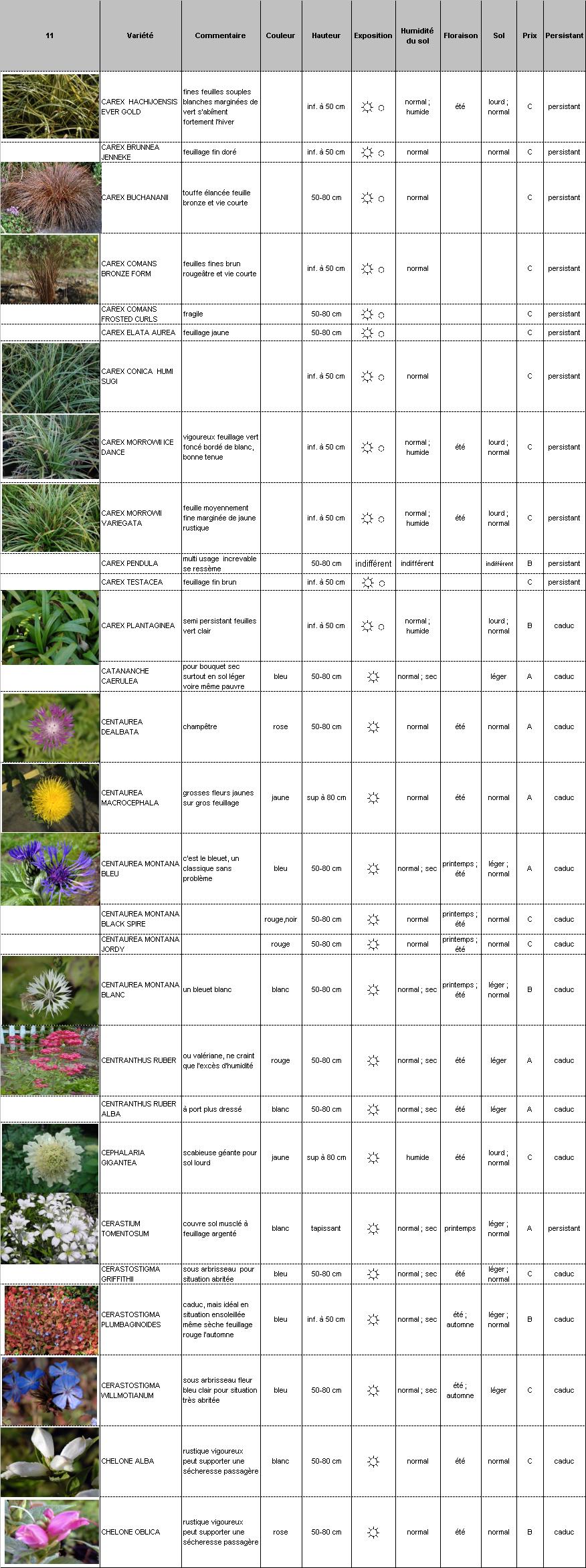 Plantes vivaces p pini re demoinet le catalogue carex for Catalogue plantes vivaces