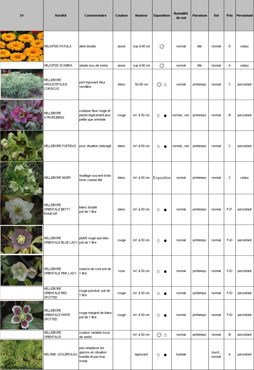Plantes vivaces p pini re demoinet le catalogue for Catalogue plantes vivaces