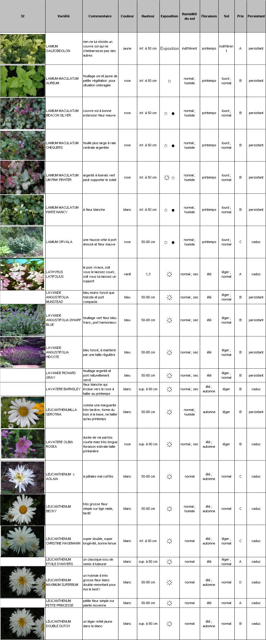Plantes vivaces p pini re demoinet le catalogue lamium for Catalogue plantes vivaces