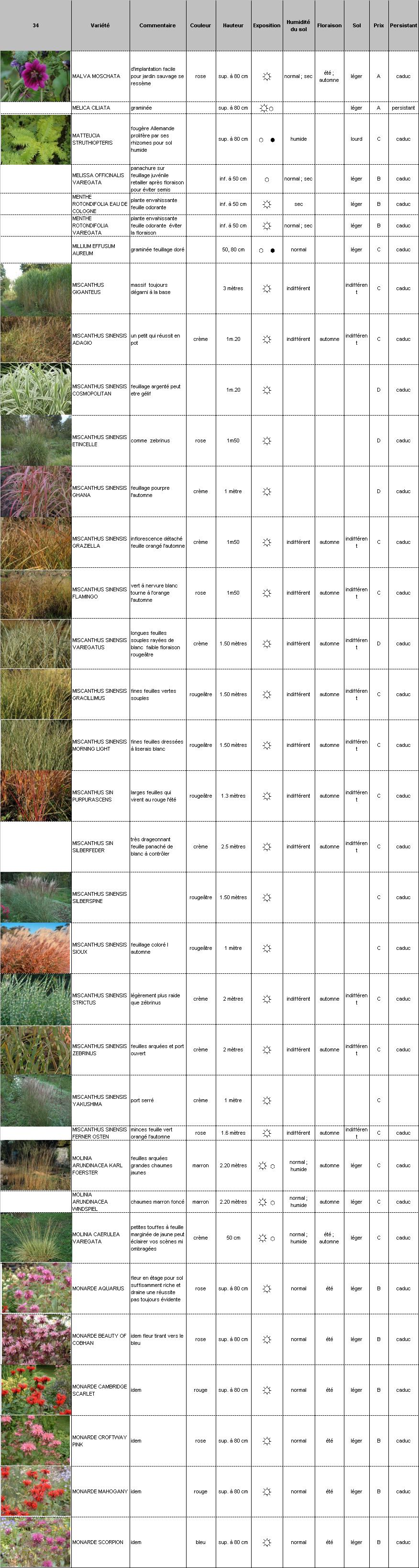 Plantes vivaces p pini re demoinet le catalogue malva for Catalogue plantes vivaces